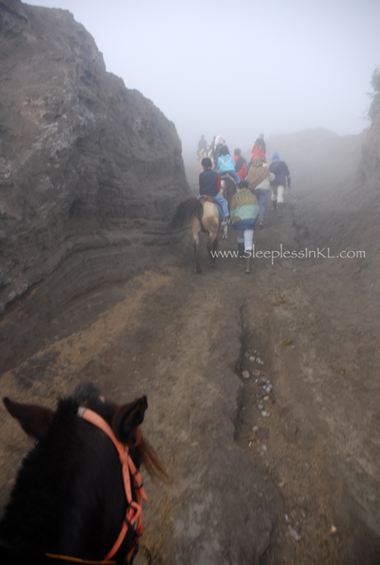 horse trail leading to Mt Bromo