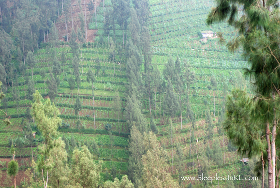 vegetables growing on the steep mountainsides